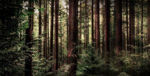 Die Furcht, die hinter den Bäumen haust